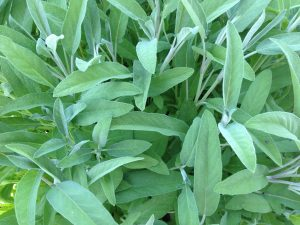 Bulk Organic and Wildcrafted Herbs and Spices | American